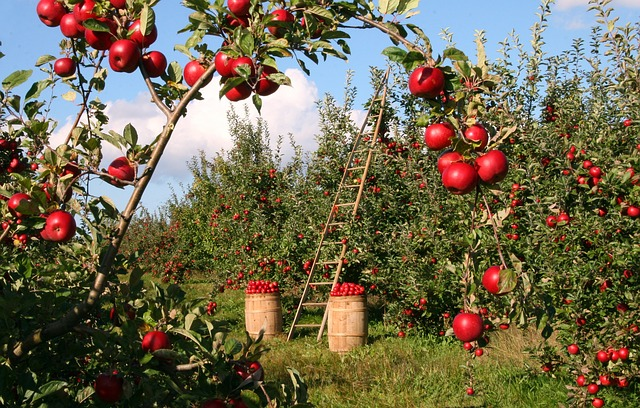"The Gastronomy Tourism Value Chain in ""Apple Country"""